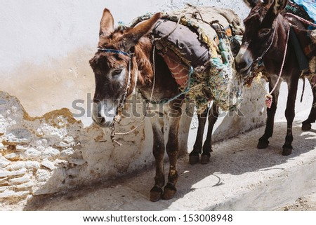Donkeys on the street in Medina of Fes, Morocco - stock photo