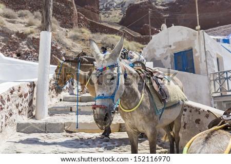 donkeys, Santorini, island,Greece - stock photo