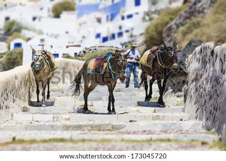 donkeys, Santorini island,Greece  - stock photo