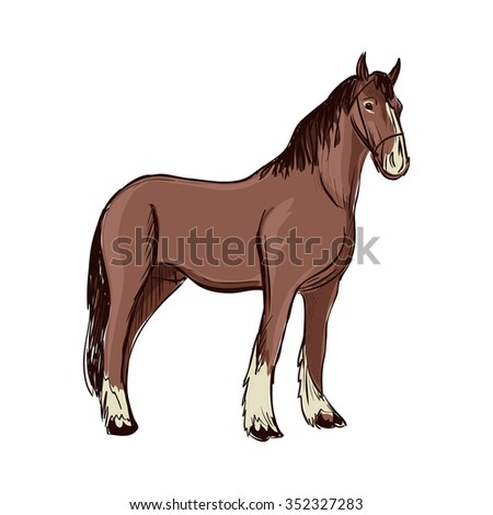 Doodle Horse. Isolated in white background.