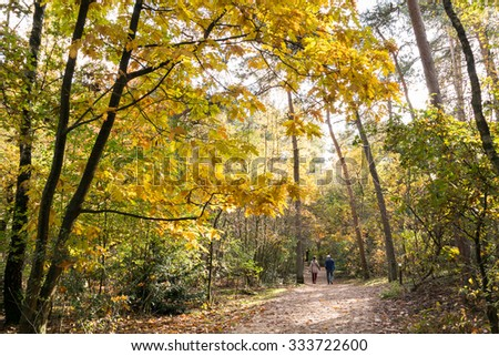 DOORN, NETHERLANDS - OCT 25, 2015: Senior couple walking in the woods on a sunny day in autumn