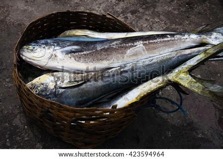 Dorado dolphin fish also known as mahi-mahi or Coryphaena Hippurusl / Indonesia, Bali - stock photo