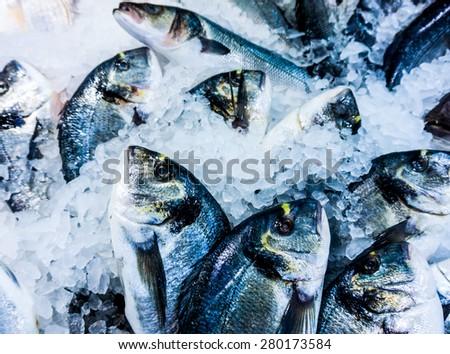 dorado fish on ice in fish market. Fresh fish at the market - stock photo