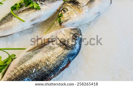 Dorado fish on the ice - stock photo