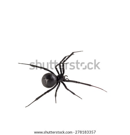 34 moreover 1354 additionally I0000H8jJ8QotgFc moreover Fobi further Spiders. on sac spider