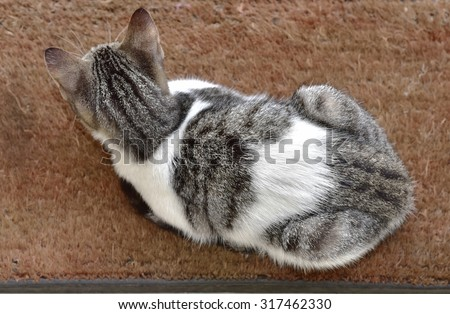 Dorsal side of a Pet cat sitting on a coir door mat. View from above. - stock photo