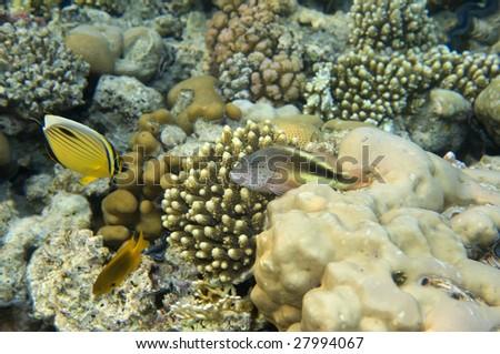 Below Sea Level Fish