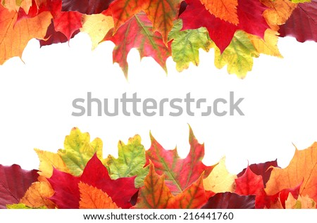 Double border of vibrant colorful autumn or fall leaves in shades of red, yellow, orange and green with central white copyspace for your greeting or Thanksgiving message - stock photo