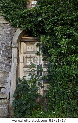 Double doors covered with ivy - stock photo