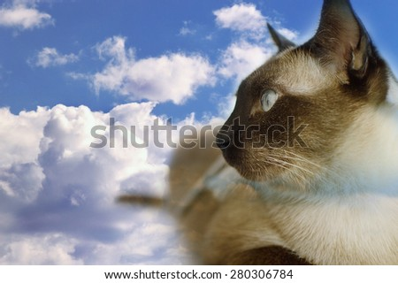 Double exposure domestic cat of thai with the cloudy sky. - stock photo