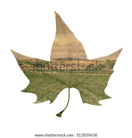 double exposure of a platanus leaf and a natural landscape, against a white background - stock photo