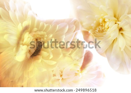 Double exposure of couple kissing and flowers. Close up. - stock photo
