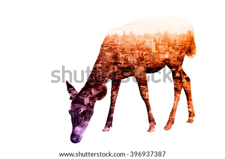 Double Exposure of Deer with Cityscape and Building as Natural or Wildlife conservancy Concept