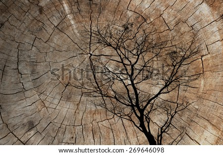 Double exposure of silhouette dead tree  and Cut tree trunk. nature background - stock photo