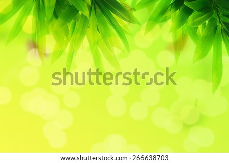 Double Exposure Photo Bamboo leaf and Green bokeh background