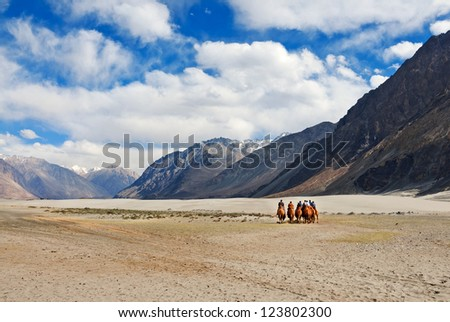 "double hump  camel riding at desert of ""Nubra Valley"" in Ladakh"