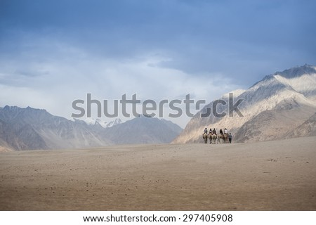 Double humped camel rides at Nubra Valley, Leh, India