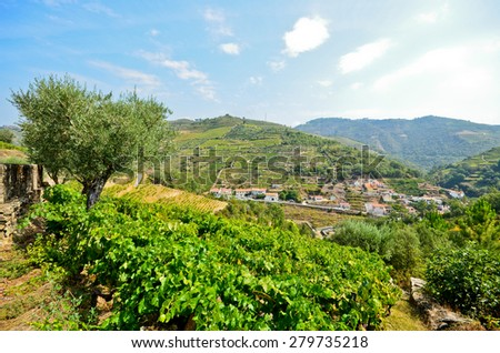 Douro Valley: Vineyards and small village near Peso da Regua, Portugal  - stock photo