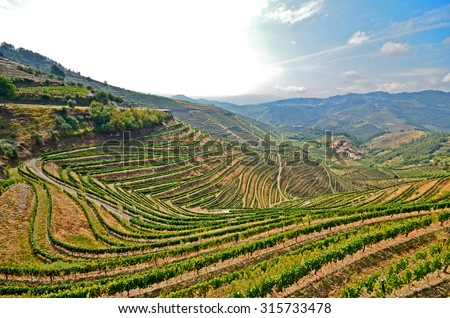 Douro Valley: Vineyards near Duero river and Pinhao, Portugal  - stock photo