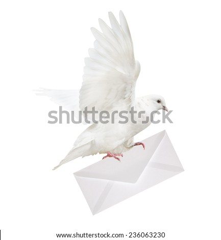 dove carrying envelope isolated on white background - stock photo