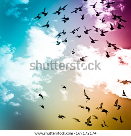dove flying on blue sky freedom concept background - stock photo