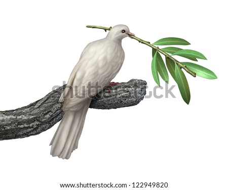 dove holding an olive branch isolated on a white background as a symbol of peace and