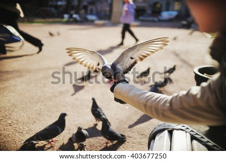 dove in flight gets into the hands of a girl - stock photo