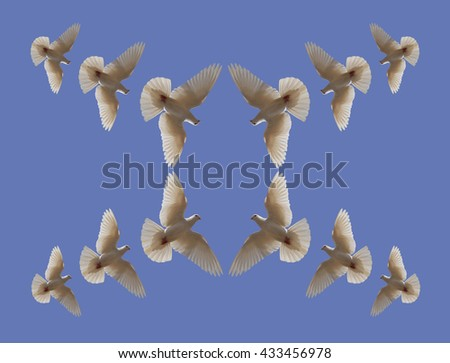 Dove in the air with wings Background  - stock photo