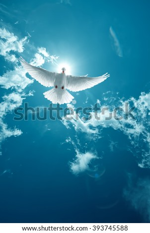 Dove in the air with wings wide open in front of bright sun, symbol of faith - stock photo