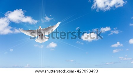 Dove in the air with wings wide open symbol of faith panoramic view