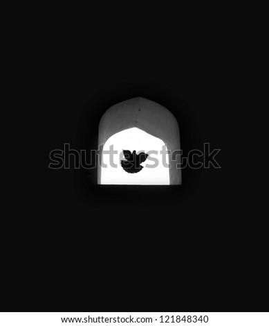 Dove of hope flying through window - stock photo