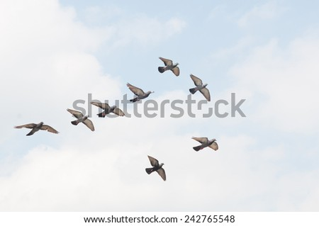 dove on a background of blue sky  - stock photo