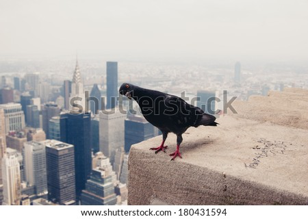 Dove on the roof in New York. New York Downtown skyline and lonely pigeon on the roof looking at camera. A lot of space for text. Copy space.  - stock photo