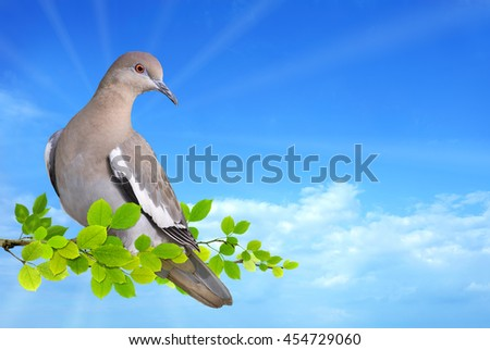 Dove perched on branch against blue sky background - stock photo