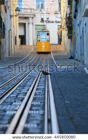 Dove sitting before  Bica Funicular, Lisbon, Portugal   - stock photo