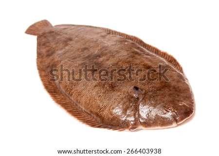 Dover sole (Solea solea) fish whole isolated on a white studio background. - stock photo