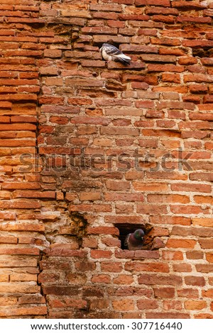 Doves in the stone wall. - stock photo