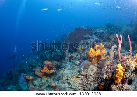 Down Deep in St Lucia - stock photo