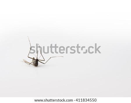 Downed mosquito, isolated on natural white. - stock photo