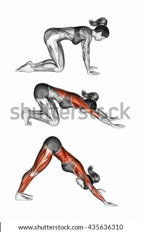 Downward Facing Dog. Adho Mukha Svanasana. Yoga. Target muscles are marked in red. Step by step. 3D illustration - stock photo