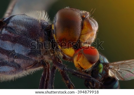 dragon fly and prey - stock photo