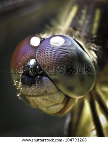 Dragon fly face close-up - stock photo
