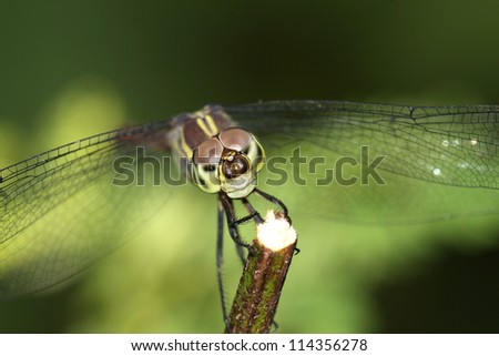 Dragon fly face close-up on nature - stock photo