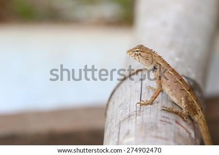 dragon on bamboo - stock photo