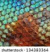Dragon skin pattern texture background. - stock photo