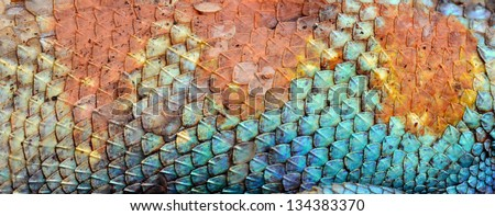 Dragon skin pattern texture background. - stock photo