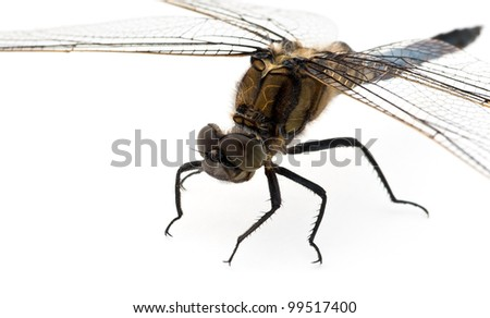 Dragonfly against a white background - stock photo