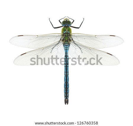 Dragonfly Anax imperator (male) Blue Emperor on a white background - stock photo