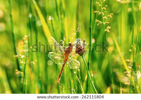 dragonfly and spider sitting on a flower on blurred green background - stock photo