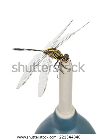 dragonfly catch on lens blower isolated on white - stock photo